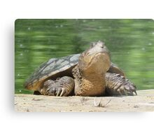 Giant Snapping Turtle Metal Print