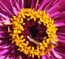 Magenta Flower Sticker