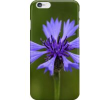 Macro photo of a cornflower (Centaurea cyanus) iPhone Case/Skin