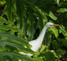 Hawaiian Garden Visitor - a Bright White Egret in the Lush Greenery Sticker