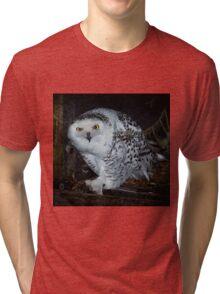 Snowy Owl Tri-blend T-Shirt