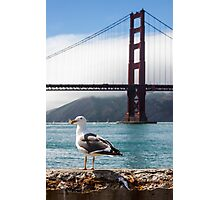 Seagull in the Bay Photographic Print