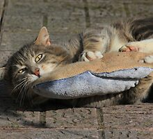 Grey cat playing with toy fish by turniptowers