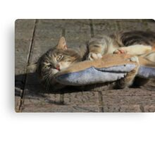 Grey cat playing with toy fish Canvas Print