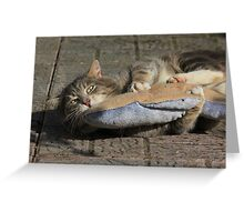 Grey cat playing with toy fish Greeting Card
