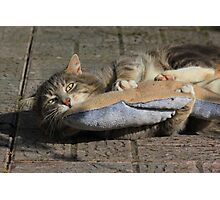 Grey cat playing with toy fish Photographic Print