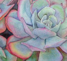Succulent ll  Sticker