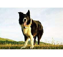 The smile of Indy Photographic Print