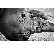 Woburn Safari Park - Rhino Photographic Print