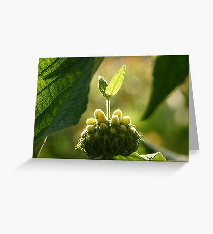 Veins Alight  Greeting Card