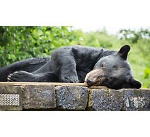 Woburn Safari Park - Bear Photographic Print