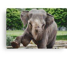 Woburn Safari Park - Elephant Canvas Print
