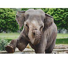 Woburn Safari Park - Elephant Photographic Print