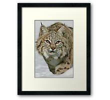 Stealthy Predator Framed Print