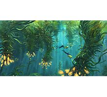 Exploring the Kelp Forest Photographic Print