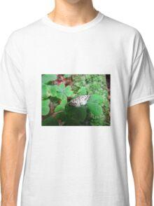 one little moth Classic T-Shirt