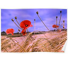Barley with Poppies Poster
