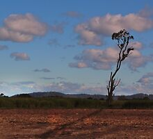 Standing alone in a cane field by myraj