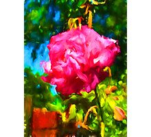 Pink Rose next to the Brick Wall Photographic Print