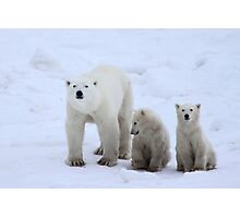 Polar Bears Family Portrait #3, Churchill, Canada Photographic Print