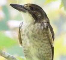 Butcherbird Sticker