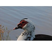 Bird-naturally sitting Photographic Print