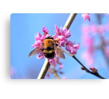 Eastern Redbud And The Bee Canvas Print