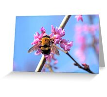 Eastern Redbud And The Bee Greeting Card