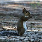 Little Squirrel by Cynthia48