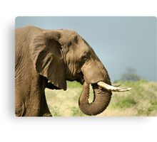 THE AFRICAN ELEPHANT IN PROFILE – Loxodonta Africana - AFRIKA OLIFANT Canvas Print