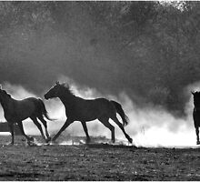 HORSE SILHOUETTES IN BLACK AND WHITE by Magriet Meintjes