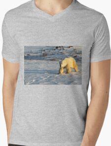 Polar Bear Walking in Footprints, Churchill, Canada Mens V-Neck T-Shirt