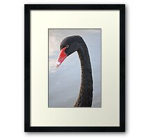 Black Swan 4 Framed Print