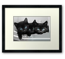 Blue Eyed Kittens Framed Print