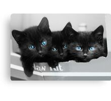 Blue Eyed Kittens Canvas Print