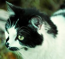 This Is Tuxedo by rachelemk