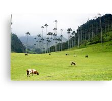 Cows grazing in the green meadows at the Cocora valley Canvas Print