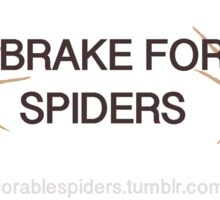 spider bumper sticker Sticker