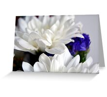 White flowers macro, natural background. Greeting Card