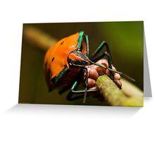 Stink bug 666 Greeting Card