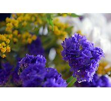 Purple flowers, nature background. Photographic Print