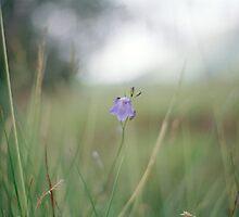 Flower by Louise Bichan