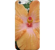 Stunning Hibiscus after the rain. 'Iluka' NSW. North Coast, iPhone Case/Skin