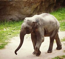 Roaming Elephant by Bine