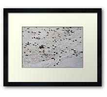 Tiny Crabs Framed Print