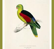 Colorful Parrot by dorcas13
