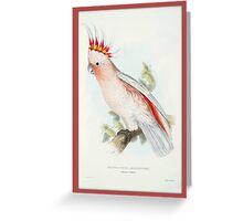 Leadbeater Cockatoo Bird Greeting Card