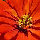 Fire Flower by Kenneth Hoffman