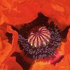 Poppy Fire by Fay270