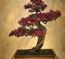 Bonsai Tree by Jessica Jenney